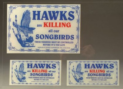 Hawks Are Killing Our Songbirds Sticker - Pack of 3