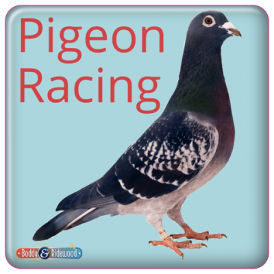 Pigeon Fridge Magnet 2'' Square Domed