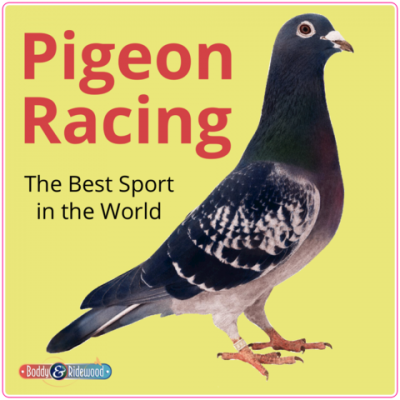 Pigeon Window Sticker 150mm (6'') Yellow Background
