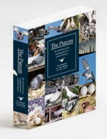 The Pigeon by Dr. Colin Walker BSc BVSc MACVS